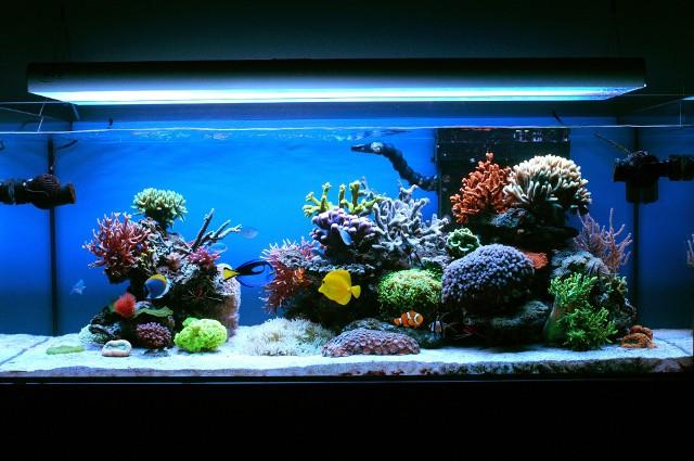 Akwarium z rafą koralowąAkwarium z rafą koralową to piękny, nastrojowy dodatek w aranżacji wnętrz. Ujmuje bogatą kolorystyką i niesamowitymi kształtami.