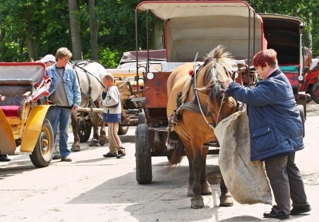 – Moje konie i konie innych dorożkarzy są zadbane – mówi Grażyna Szymkiewicz. – Są pod stałą opieką weterynarza. Nie tylko podczas kontroli. Jak widzimy, że coś się z którymś koniem dzieje coś złego natychmiast reagujemy.