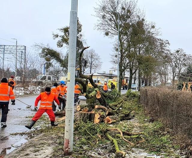 Mieszkańcy od 2019 roku próbowali zablokować wycinkę blisko 120 drzew. Wiele z nich to ok. 100-letnie okazy
