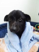 Pies Franio leżał na grobie, ale nie swojego właściciela. Wkrótce trafi do nowego domu [ZDJĘCIA]