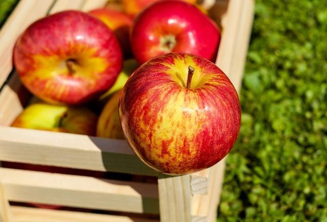 """Zobacz jakie są prognozy ekspertów na nadchodzący sezon jabłkowy Kliknij w przycisk """"zobacz galerię"""" i przesuwaj zdjęcia w prawo, naciskając strzałkę lub przycisk NASTĘPNE"""