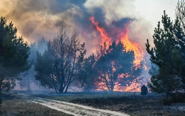 Działania po wypadku w Szubinie, gdzie nastąpił wyciek żrącego toluenu, były jedną  z największych akcji straży w tym roku w regionie. Uczestniczyło w niej 102 strażaków z 39 zastępów. Ale w ostatnich miesiącach strażacy walczyli też z żywiołem gasząc też największe od lat pożary.Strażacy pracowali na miejscu wypadku w Szubinie ponad dwie doby. Dopiero po takim czasie udało się przywrócić ruch samochodów, choć walka z zagrożeniem skażenia ziemi przez toksyczny toluen, który wyciekł z cysterny (po zderzeniu dwóch ciężarówek) - trwa.Działania po wypadku, do którego doszło 26 kwietnia pod Bydgoszczą, to jedna z największych akcji w tym roku. Brało w niej udział  102 strażaków.- Na miejscu pracowali strażacy 39 zastępów - mówi kpt. Arkadiusz Piętak, rzecznik prasowy Komendy Wojewódzkiej Państwowej Straży Pożarnej w Toruniu. - W tym 31 zastępów PSP i 8  Ochotniczej Straży Pożarnej.Działali między innymi specjaliści z grupy chemicznej z Bydgoszczy z JRG nr 2 w  Fordonie. To nie jedyna jednostka w regionie, która została powołana do walki z zagrożeniami chemicznymi.- Mamy w województwie kilka grup specjalistycznych  - wylicza kpt. Piętak. - W samej tylko Bydgoszczy działają takie trzy. Poza chemikami są również specjaliści z grupy ratownictwa wysokościowego. Ci strażacy  zdobywają najlepsze wyniki na zawodach ratowników, są wielokrotnymi drużynowymi i indywidualnymi mistrzami Polski w ratownictwie wysokościowym. Poza tym działa w Bydgoszczy grupa wodno-nurkowa.Strażacy z JRG-2 w Bydgoszczy jako jedna z niewielu jednostek w Polsce mają specjalistyczne detektory systemu RAPID,  które służą do wykrywania zagrożeń związkami chemicznymi w chmurze (np. dymu). Urządzenie  jest zamontowane na samochodach land rover i działa w podczerwieni. Przy sprzyjających warunkach można za pomocą tego systemu wykrywać zagrożenia gazami z odległości nawet 5 kilometrów.We Włocławku natomiast działają zespoły chemiczny i ratownictwa wodnego. W Chełmży - specjalistyczna grupa poszukiwawcza. W Kuja