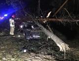 Wyszyna Fałkowska. Wypadek na krajowej drodze. Audi dosłownie wbiło się w las i ścięło kilka drzew. A kierowca zniknął... [ZDJĘCIA]