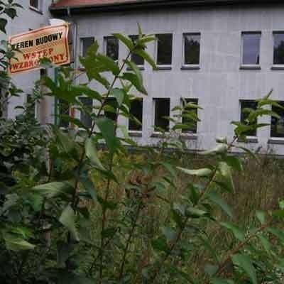Na zdjęciu zrobionym przez naszego internautę widać, że trawa i chaszcze dawno nie widziały kosiarki...