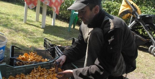 Sebastian Weber też z grzybami do skupu przyszedł. Z kurkami.
