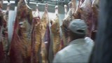 Chore krowy jechały na ubój spod Brodnicy [AFERA MIĘSNA] Jest wyrok za udział w okrutnym i niebezpiecznym biznesie