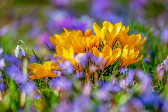 Pierwszy dzień wiosny 2021. Kiedy nastąpi kalendarzowy i astronomiczny początek wiosny? Odpowiadamy!