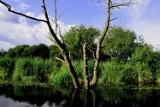 Wakacje w Wielkopolsce: Rzeka Gwda z pokładu pilskiego tramwaju wodnego [ZDJĘCIA]