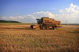 Sytuacja na rynku zbóż a ich ceny i sezonowe zmiany
