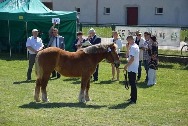 Prezentacja najpiękniejszych koni jest bardzo widowiskowa, cyklicznie cieszy się ogromnym zainteresowaniem