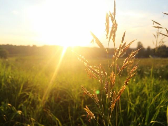 Jeśli jesteś alergikiem warto sprawdzić, co pyli w sierpniu. Dzięki temu możesz uniknąć nieprzyjemności związanych z objawami alergii. Sprawdź w naszej galerii kalendarz pylenia na sierpień dla alergików.>>>
