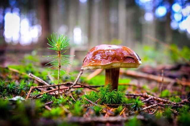 Przepis na grzyby marynowane szczególnie przyda się jesienią.