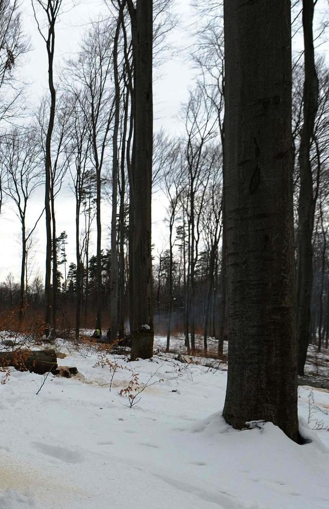 69-latek błąkał się po lesie.