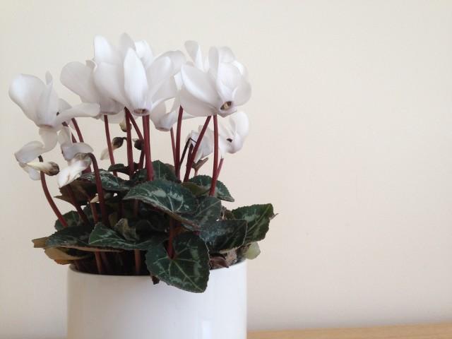 Oryginalne doniczki na kwiaty. Efektywne pomysły na wiosnę (ZDJĘCIA)Oryginalne doniczki na kwiaty - zrób to sam! (ZDJĘCIA)