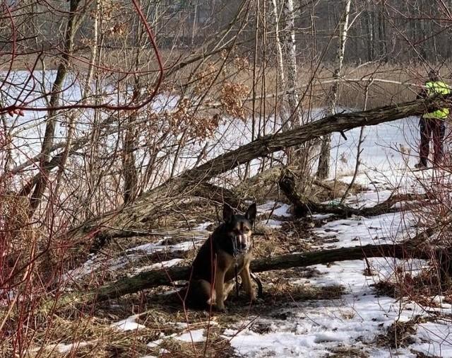 Mieszkanka zauważyła pieska przywiązanego do drzewa. Wezwano służby.Zobacz kolejne zdjęcia. Przesuwaj zdjęcia w prawo - naciśnij strzałkę lub przycisk NASTĘPNE