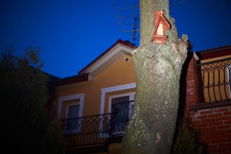 Tak wygląda rzeźba Jezusa Frasobliwego, którą można oglądać na drzewie tuż u zbiegu ulic Wiktorii i Staszica