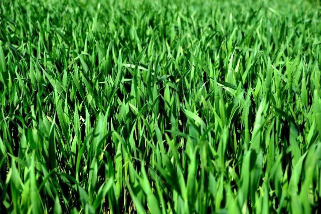Nabór wniosków o dopłaty do nasion potrwa miesiąc.