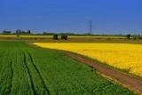 Polskie wsie najpiękniejsze na świecie? Te widoki zapierają dech w piersiach! Zobacz malownicze zdjęcia