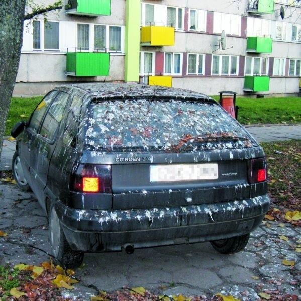 Samochód powinien jak najszybciej trafić do myjni. Jego niefrasobliwy właściciel nie wziął pod uwagę tego, że na drzewie nad autem sypiają wrony
