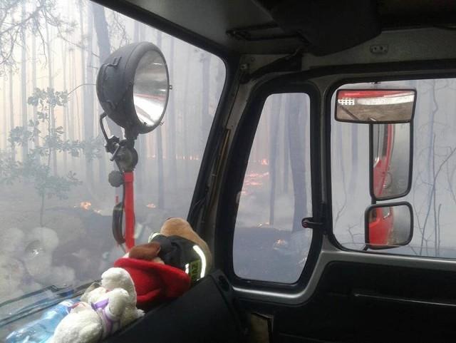 Olbrzymi pożar lasów w gminie Odrzywół.