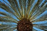 Wyrosły po setkach i tysiącach lat. Poznajcie najstarsze rośliny na świecie, które... wyrosły całkiem niedawno