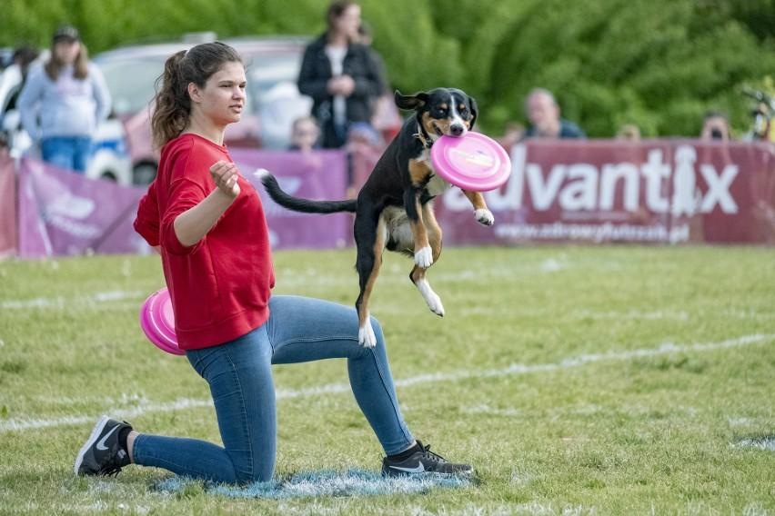 Te psy, dzięki ćwiczeniom ze swoimi właścicielami, latają w...