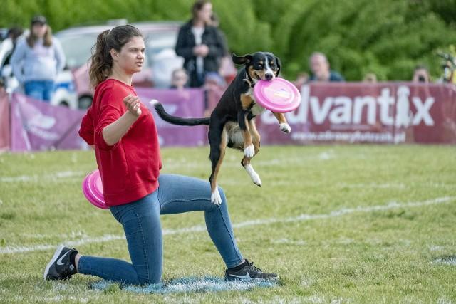 Te psy, dzięki ćwiczeniom ze swoimi właścicielami, latają w powietrzu bez strachu