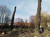Wycinka drzew na placu Andrzeja w Katowicach ZDJĘCIA Internauci nie kryją oburzenia