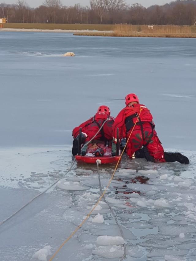 Owczarek niemiecki, pod którym załamał się lód na stawie w Marszowicach został uratowany dzięki szybkiej pomocy straży pożarnej. W działaniach brały udział jednostki OSP Gdów i Marszowice oraz JRG Wieliczka