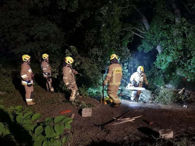 Pożar drzewa. Akcję przeprowadzili strażacy z OSP Złocieniec