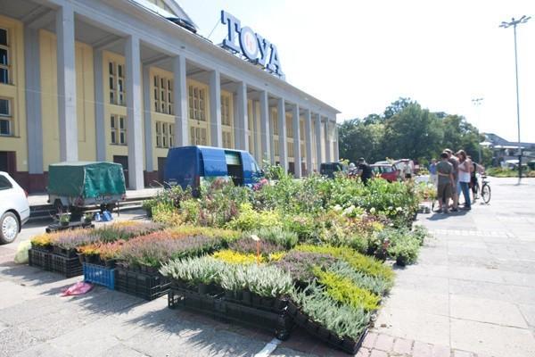 Kiermasze ogrodnicze odbywają się w każdy weekend przed Halą Sportową.