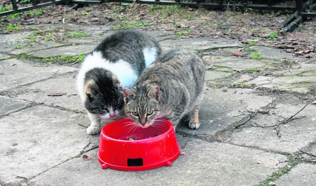 Koty wolno żyjące nie są zwierzętami bezdomnymi. Nie moga być przetrzymywane w azylach