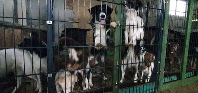 Zdjęcia z interwencji przeprowadzonej w Stargardzie GubińskimTak żyły tam psy. W takich warunkach przebywały zwierzęta.  Trwa walka o ich życie. Potrzebna jest pomoc.