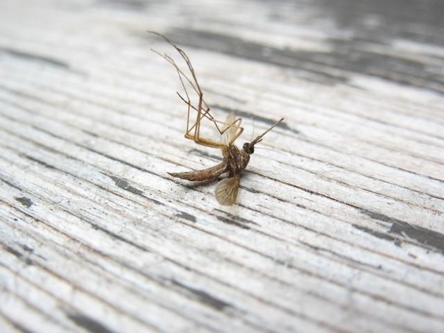 Komary. Poznaj sposoby na najlepszą ochronę przed nimi.