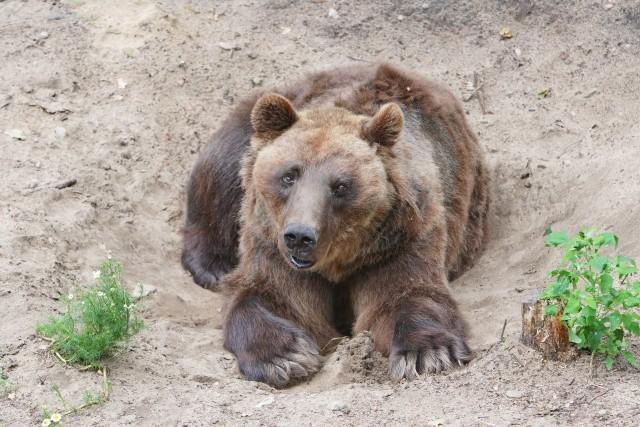 Od 19 czerwca w Nowym i w Starym Zoo w Poznaniu można już odwiedzać zwierzęta. Zrobił to w sobotę nasz fotoreporter. Kolejne zdjęcie --->