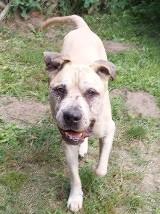 Jogi, pies z Opola, był bity i gwałcony. Przeszedł piekło, a teraz szuka nowego domu