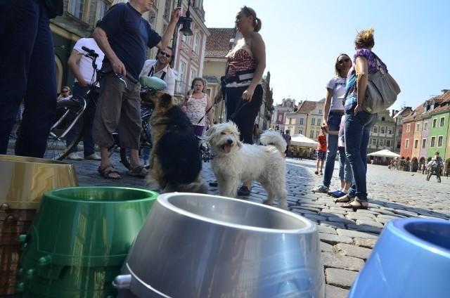 Poznań miasto MISEK: Rozdawali psie miski restauratorom