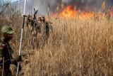 Biebrzański Park Narodowy. Pożar trudno ugasić przez silny wiatr