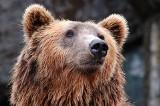 Pogoda na Podhalu. Ocieplenie obudziło tatrzańskie niedźwiedzie?