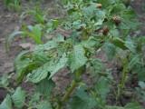 Letnie szkodniki w ogrodzie – jak się ich pozbyć