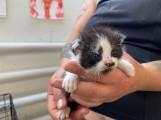 Nowe psy i koty do adopcji. Te zwierzęta czekają na dom w schronisku dla zwierząt w Toruniu