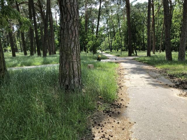 Park Miejski w Ostrołęce