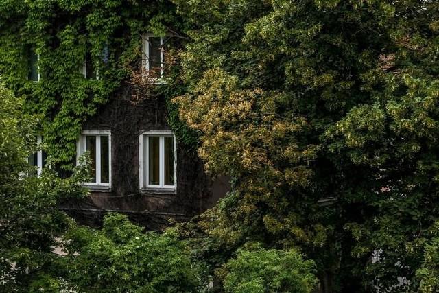 Budynek obrośnięty zielenią