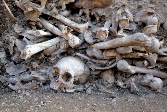 """– Szacujemy, że na całym placu na przestrzeni 500 lat miało miejsce aż 4 tysiące pochówków. W tej chwili większość szkieletów jest badana przez antropologów – tłumaczy prof. Marcin Ignaczak, kierownik projektu """"Kolegiata""""."""