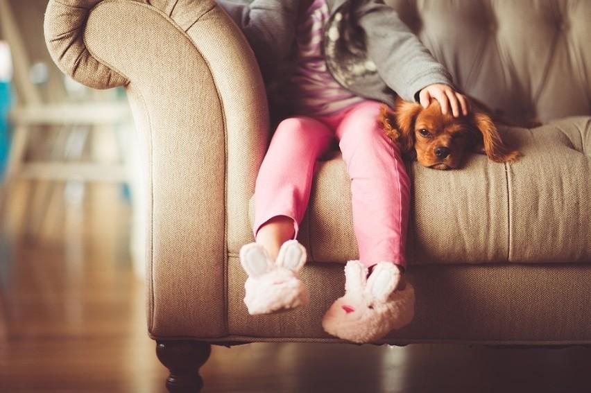 Czym jest i jak przebiega dogoterapia? Jaki wpływ na pacjenta ma pies?