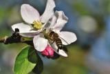 Dopłaty do pszczół i dotacja za szkody w uprawach w 2020 roku - nawet 1200 zł do hektara