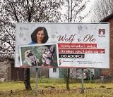 Fraszyńska, Kawalec czy Myslovitz polecają do adopcji zwierzaki ze schroniska w Mysłowicach. Billboardy stoją już w mieście