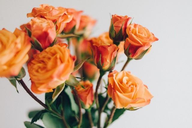 W imieniny Elżbiety każdą solenizantkę na pewno ucieszą piękne życzenia imieninowe. Dla Elżbiety, Eli, Eluni przygotowaliśmy piękne życzenia i wierszyki na imieniny. Sprawdźcie!