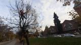Wrocław. Przy Hali Targowej mężczyzna wszedł na drzewo i wykrzykiwał hasła [FILM]