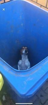 Pies wyrzucony do kosza na śmieci w Poznaniu. Kobieta, która znalazła psa, szuka jego właściciela